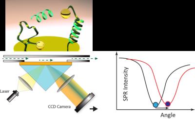 SPR surface plasmon resonance angular interrogation