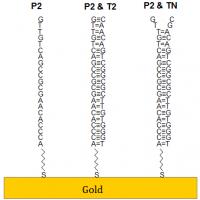 SPR DNA hybridization sensor